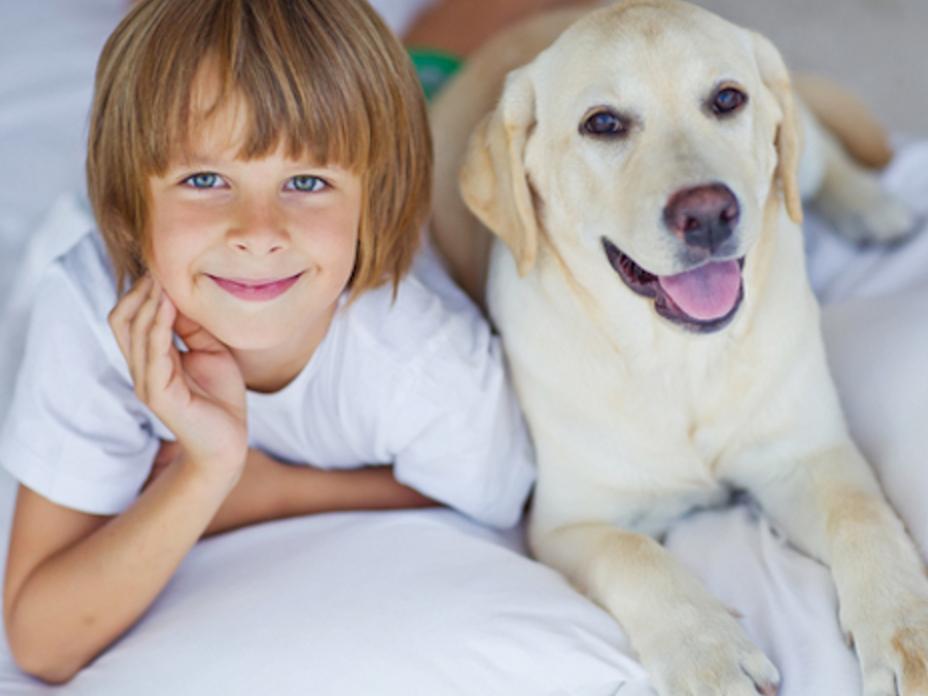 介助犬でなくても犬は自閉症児家庭を助ける