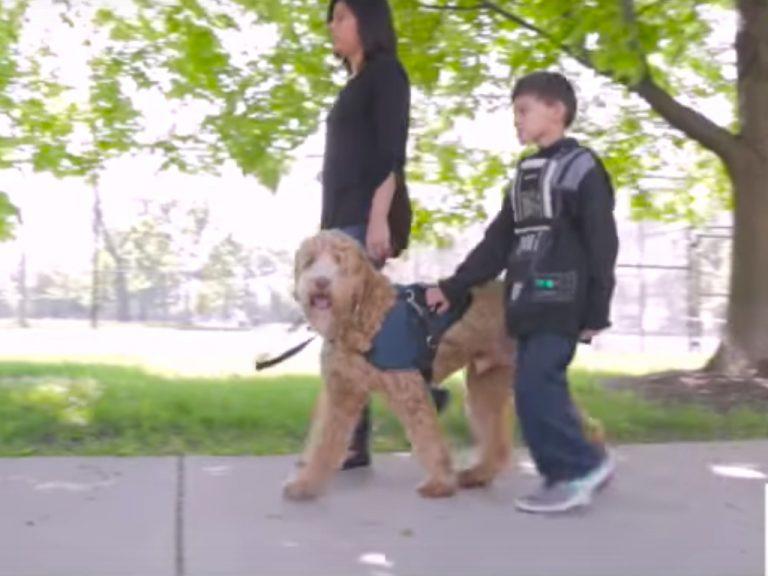 自閉症の子どもの安全を守る介助犬