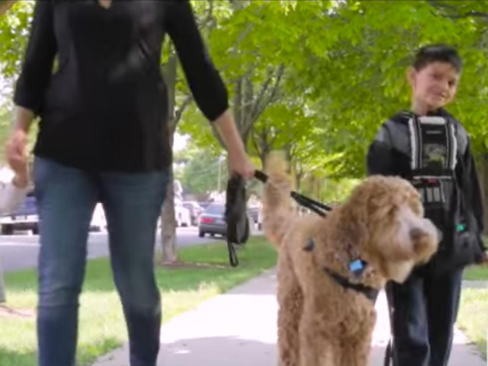 自閉症の子どもの安全を守る。自閉症の介助犬 dog2