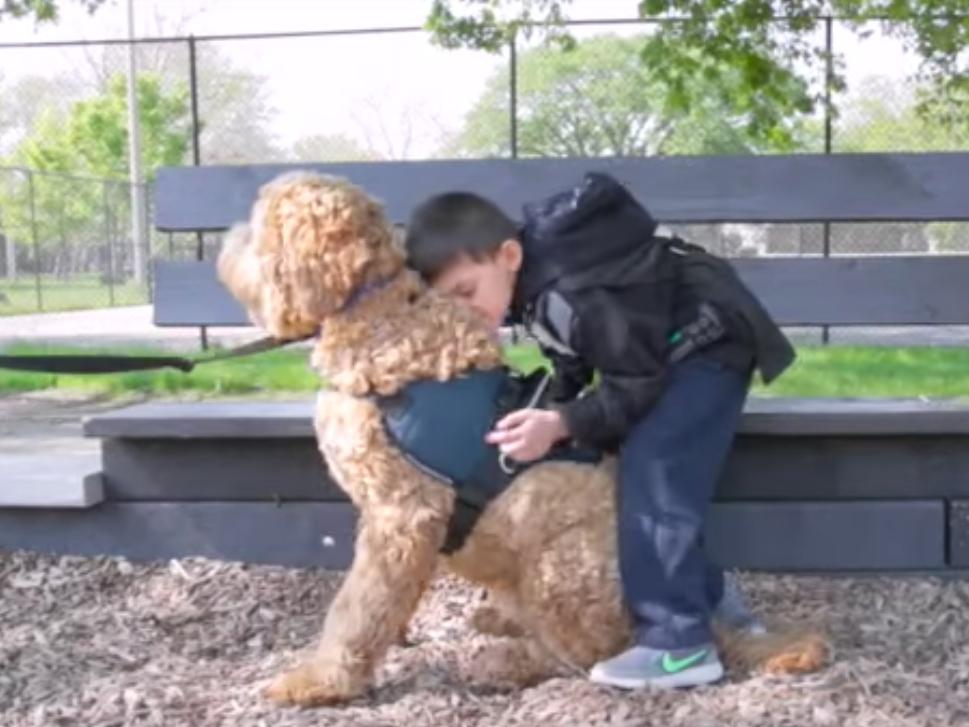 自閉症の子どもの安全を守る介助犬 dog3