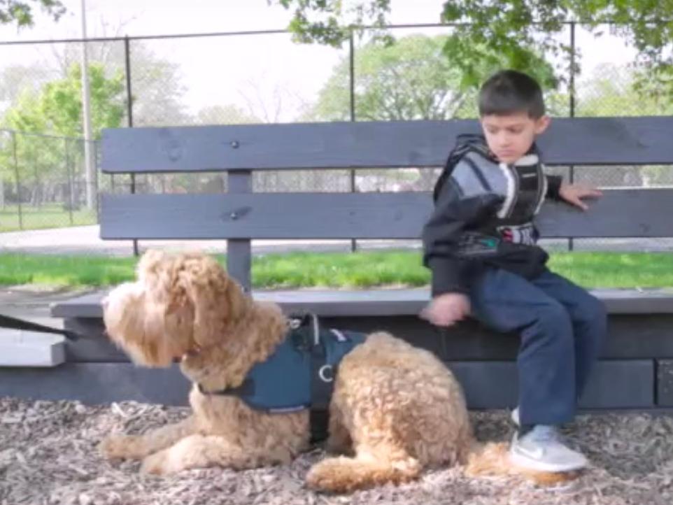 自閉症の子どもの安全を守る介助犬 dog4
