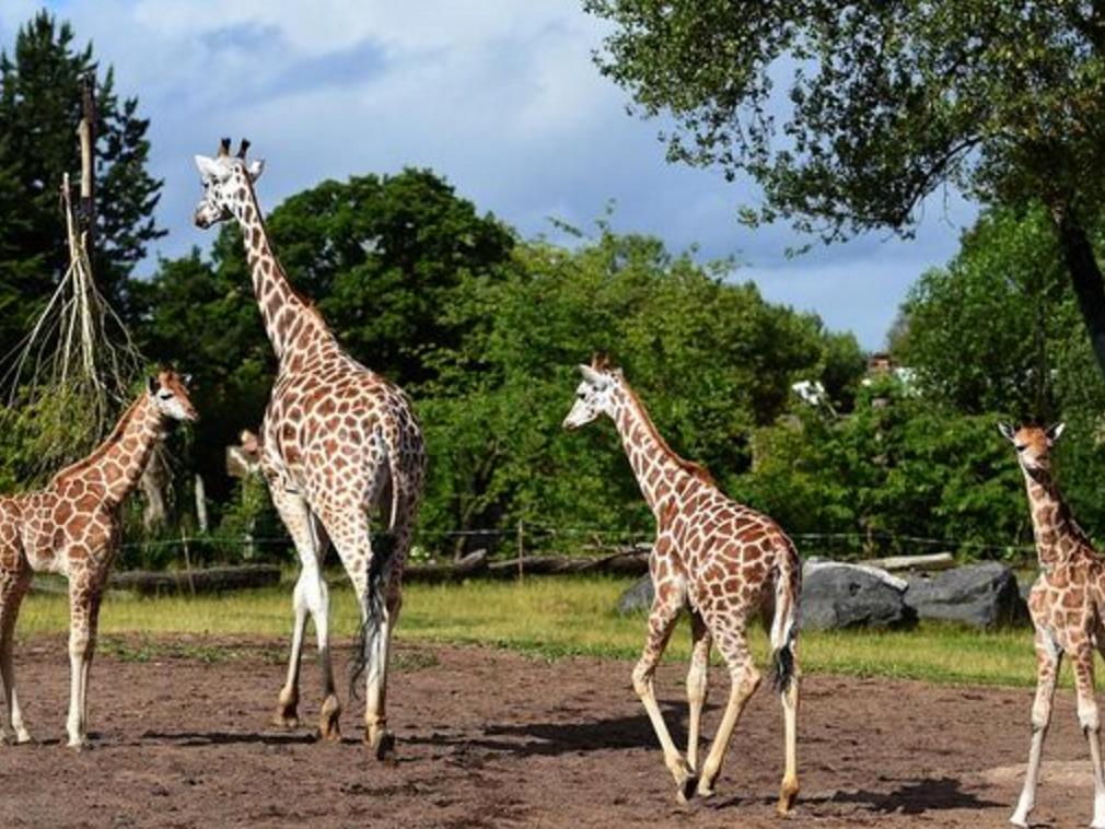 英国の動物園で発達障害の青年に起きた問題 z2
