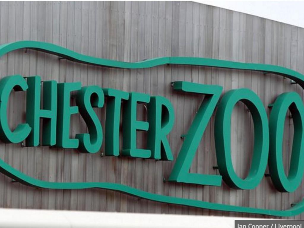 英国の動物園で発達障害の青年に起きた問題 z4