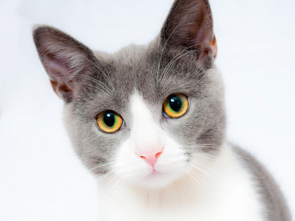 ネコだって発達障害児にいい。友だち猫研究