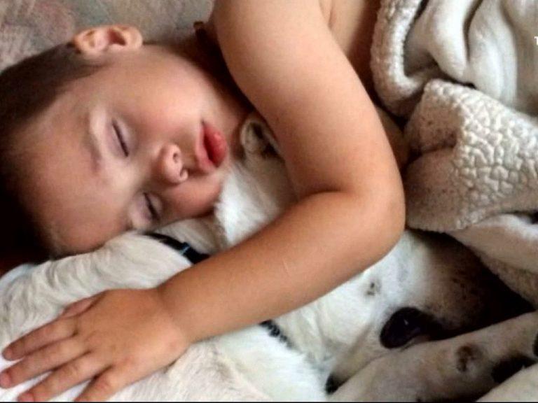 発達障害の子を眠れるようにしてくれた犬