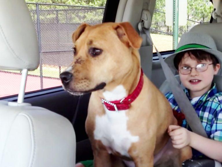 助けられた子犬が発達障害少年に愛を教える