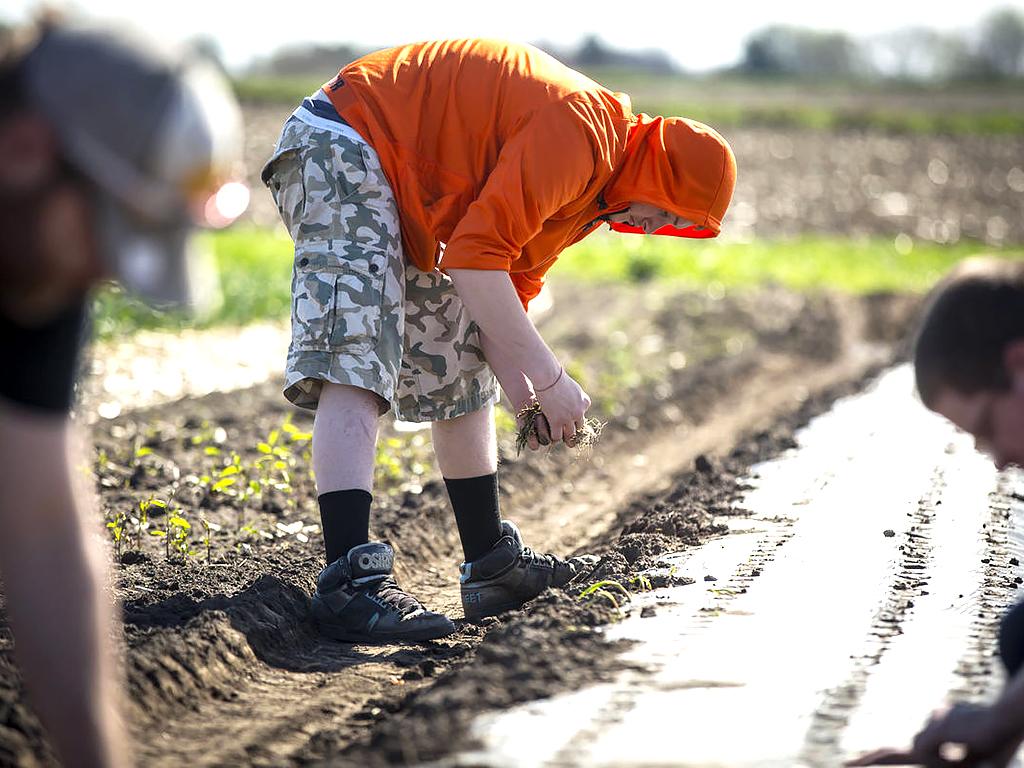 発達障害の人が野菜を育て、仲間と育つ農園 f2