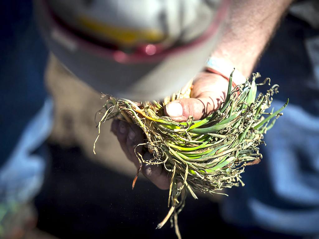 発達障害の人が野菜を育て、仲間と育つ農園 f3
