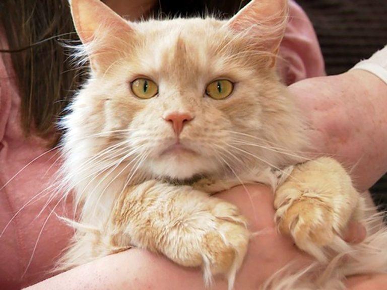 発達障害少女の必要な助けになっている猫
