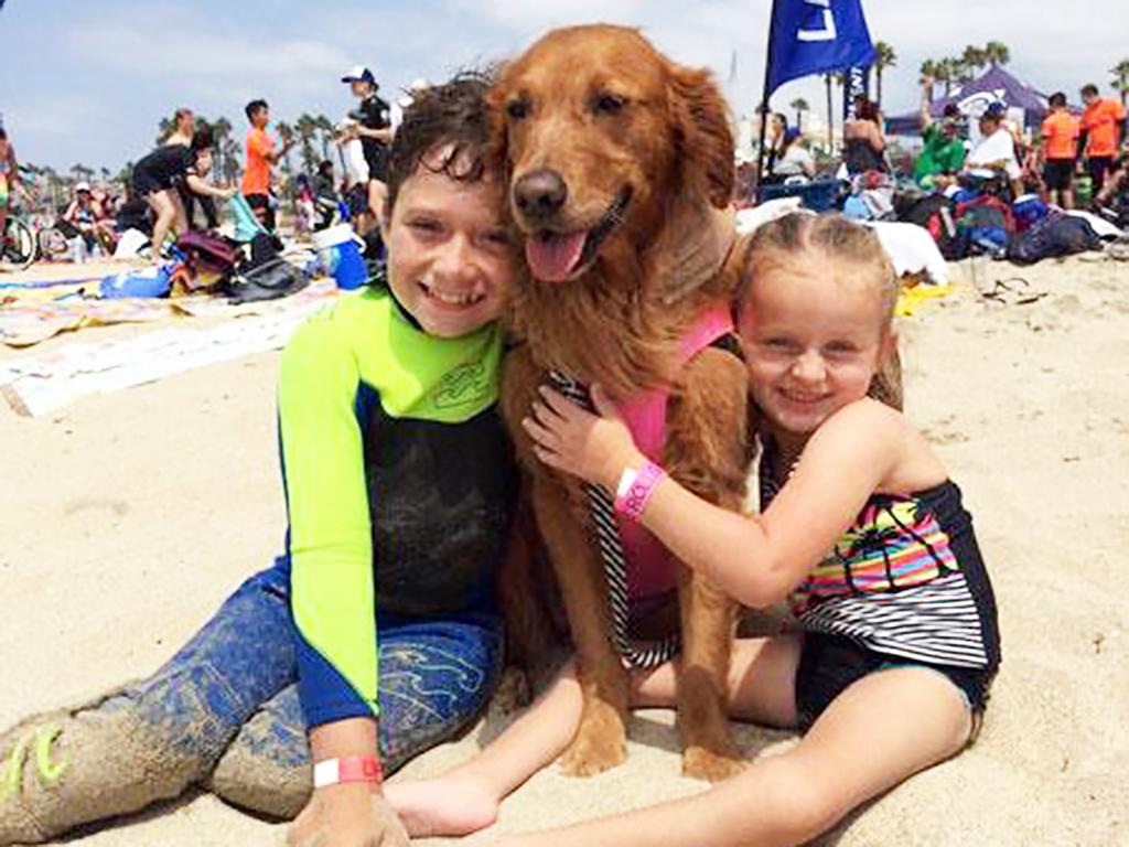 障害のある人たちを助けてきたサーフィン犬