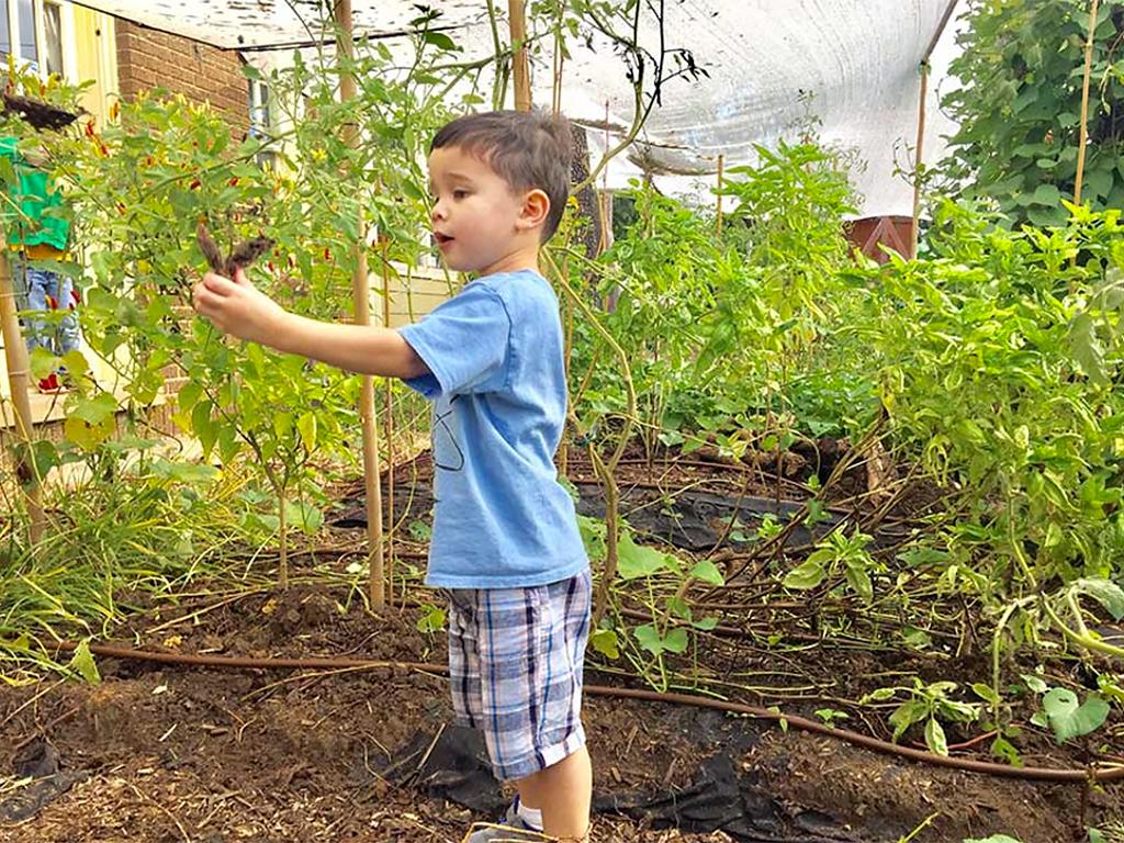 アクアポニックスの庭で発達障害の子の療育