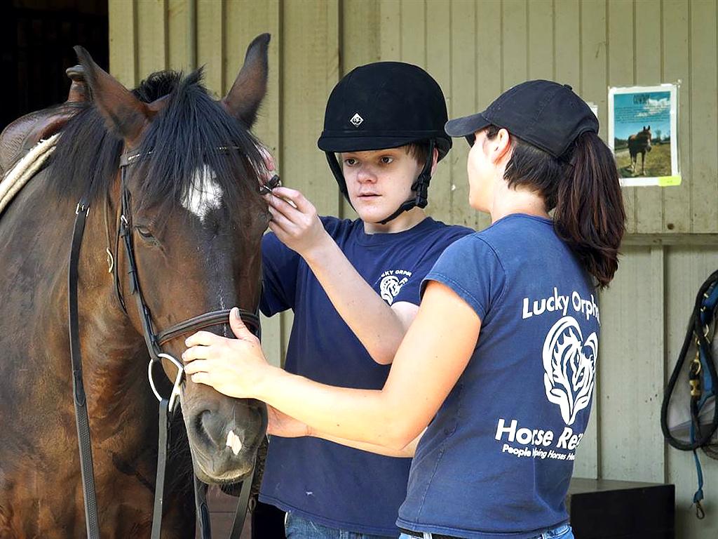 発達障害の子を助ける辛い経験をした馬たち