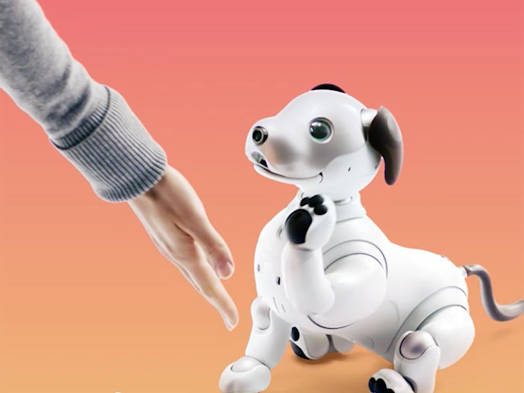 ロボットペットは発達障害の人も助け、大きく活躍をし始めている a3