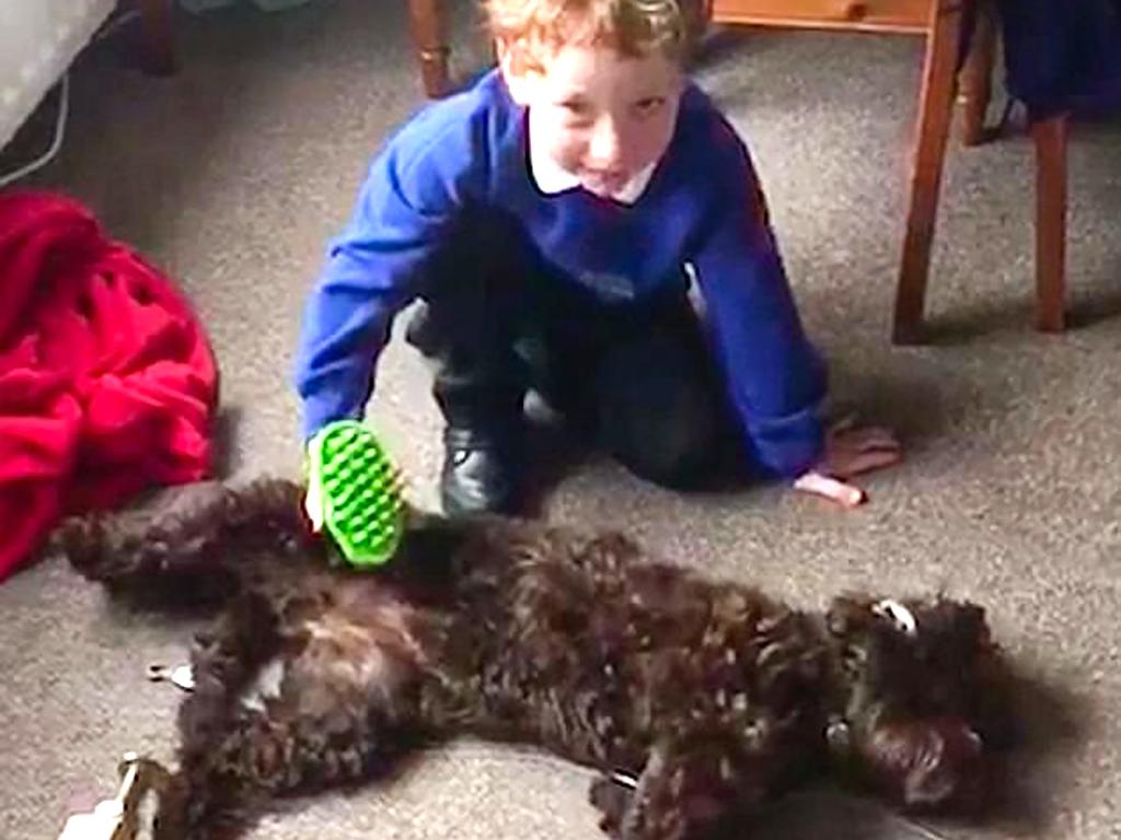 発達障害の息子を変えてくれたかわいい子犬 d6