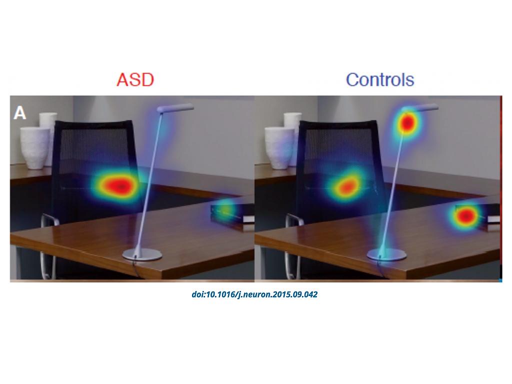 目の動きの調査結果、発達障害の人が見ないのは顔や目だけでない c3-2