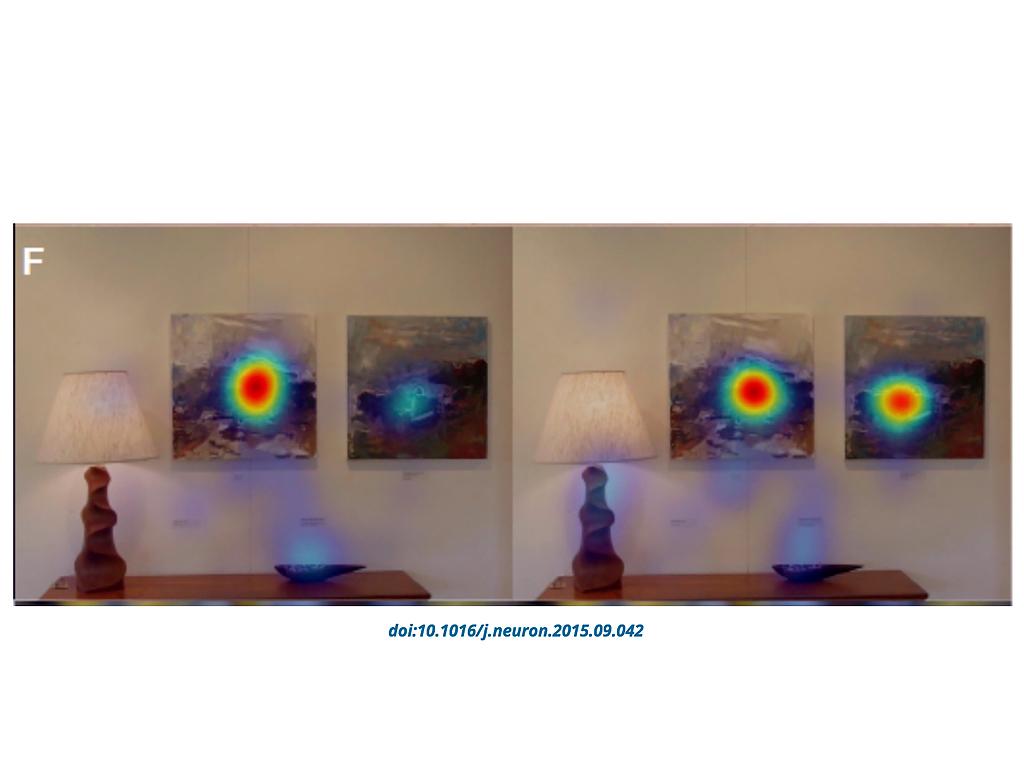 目の動きの調査結果、発達障害の人が見ないのは顔や目だけでない c5