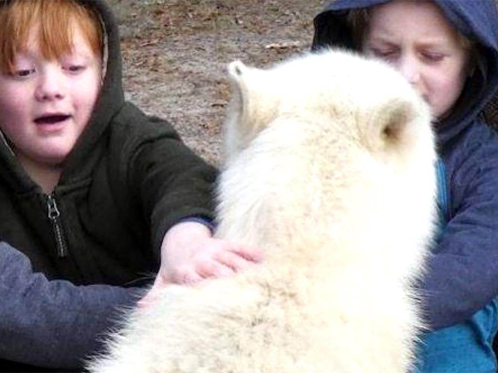 オオカミに強い興味をもち真似をする発達障害の少年が本物に会う o1