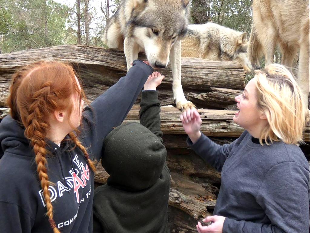 オオカミに強い興味をもち真似をする発達障害の少年が本物に会う