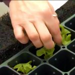 発達障害の息子と母は垂直栽培で雇用を作る