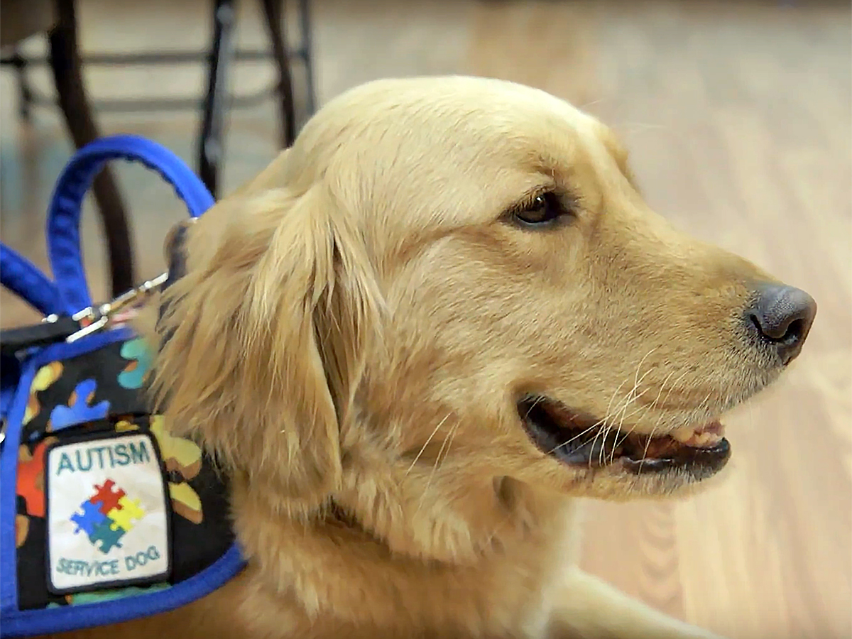 発達障害の子と家族を助けてくれる介助犬 d3-1