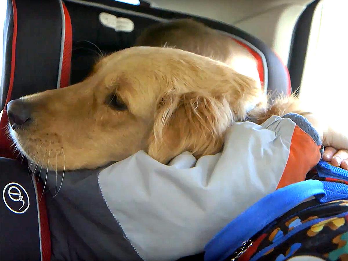 発達障害の子と家族を助けてくれる介助犬 d9-1