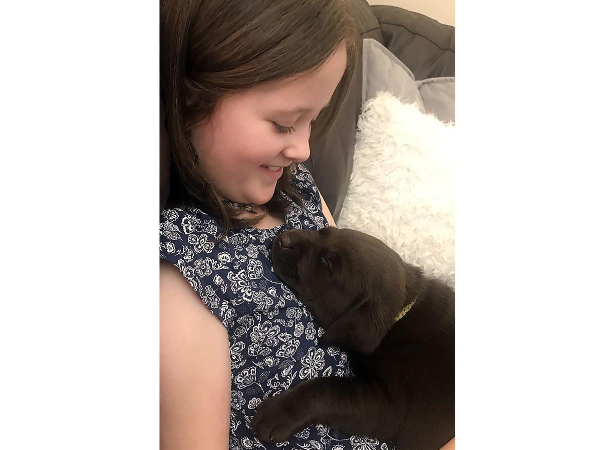 子どもが発達障害でつらいときに助けてくれるラブラドールの子犬