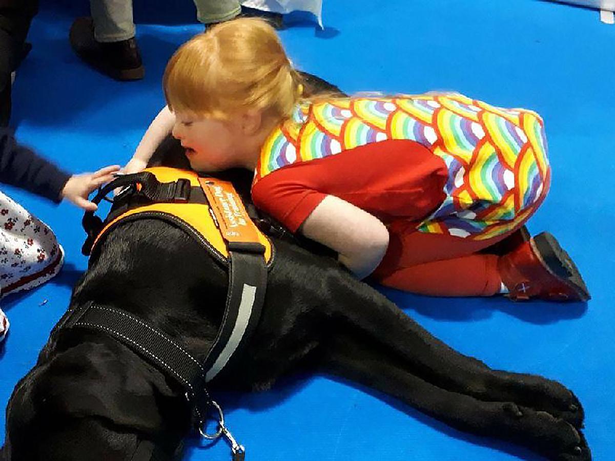 子どもが発達障害でつらいときに助けてくれるラブラドールの子犬 d5