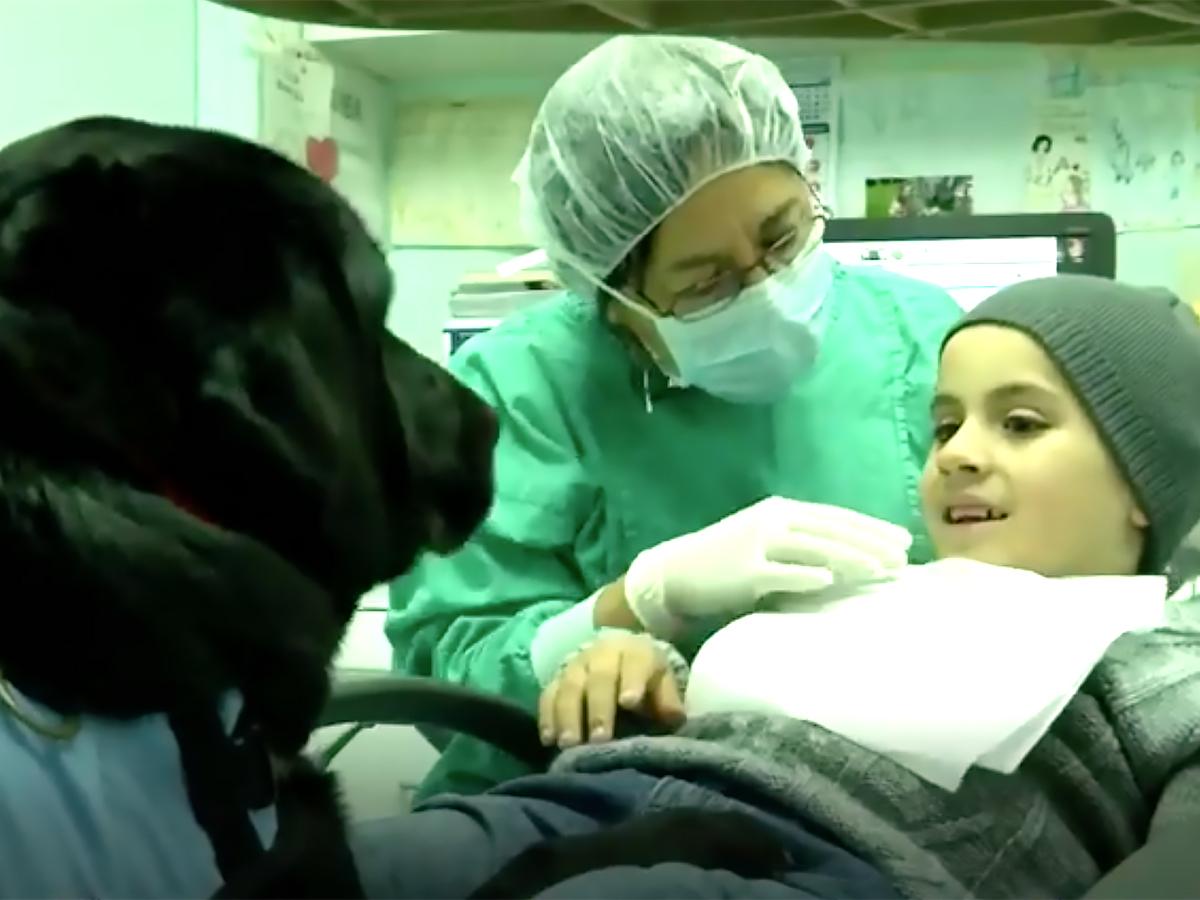 全身麻酔よりいい、歯科で治療する発達障害の子に安心をくれる犬