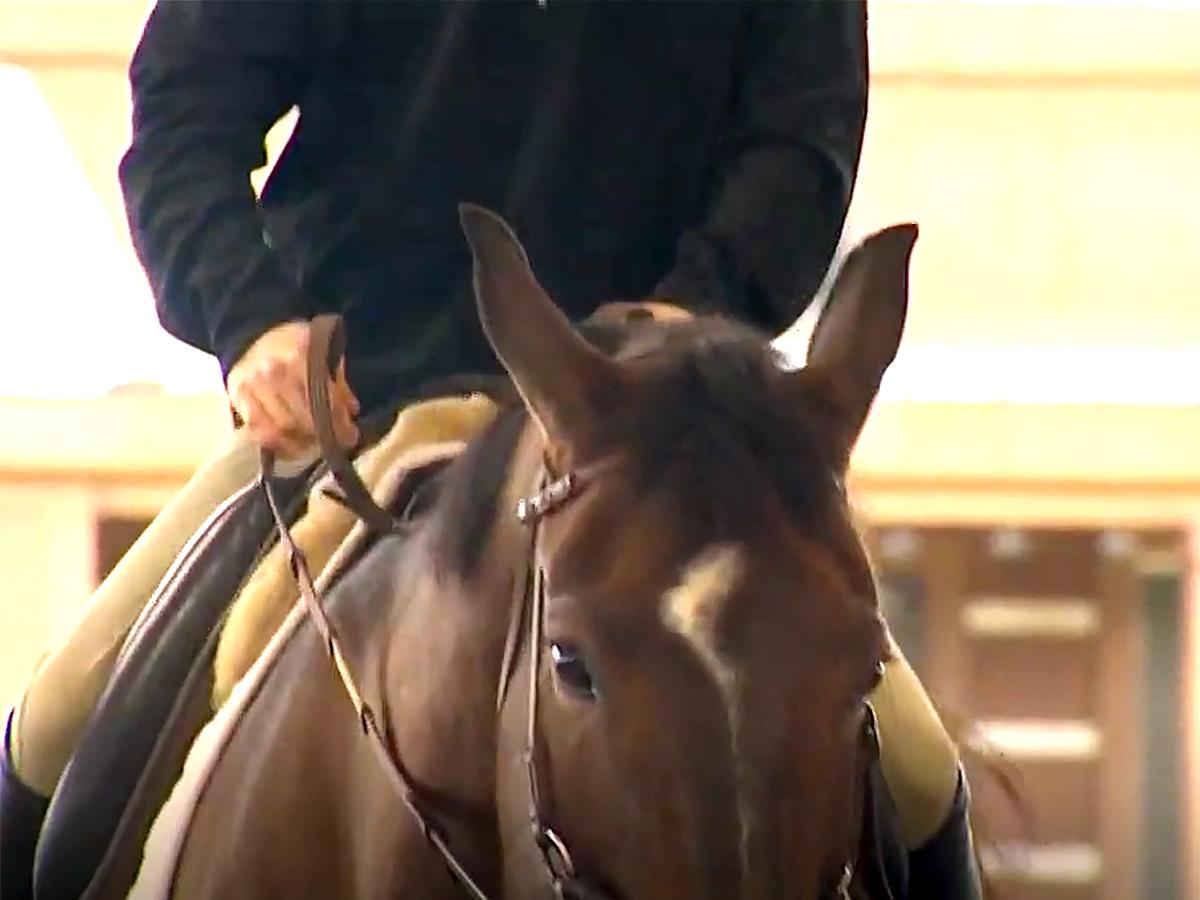 発達障害の青年は馬の療育でコミュニケーションを学び自信もつく u1