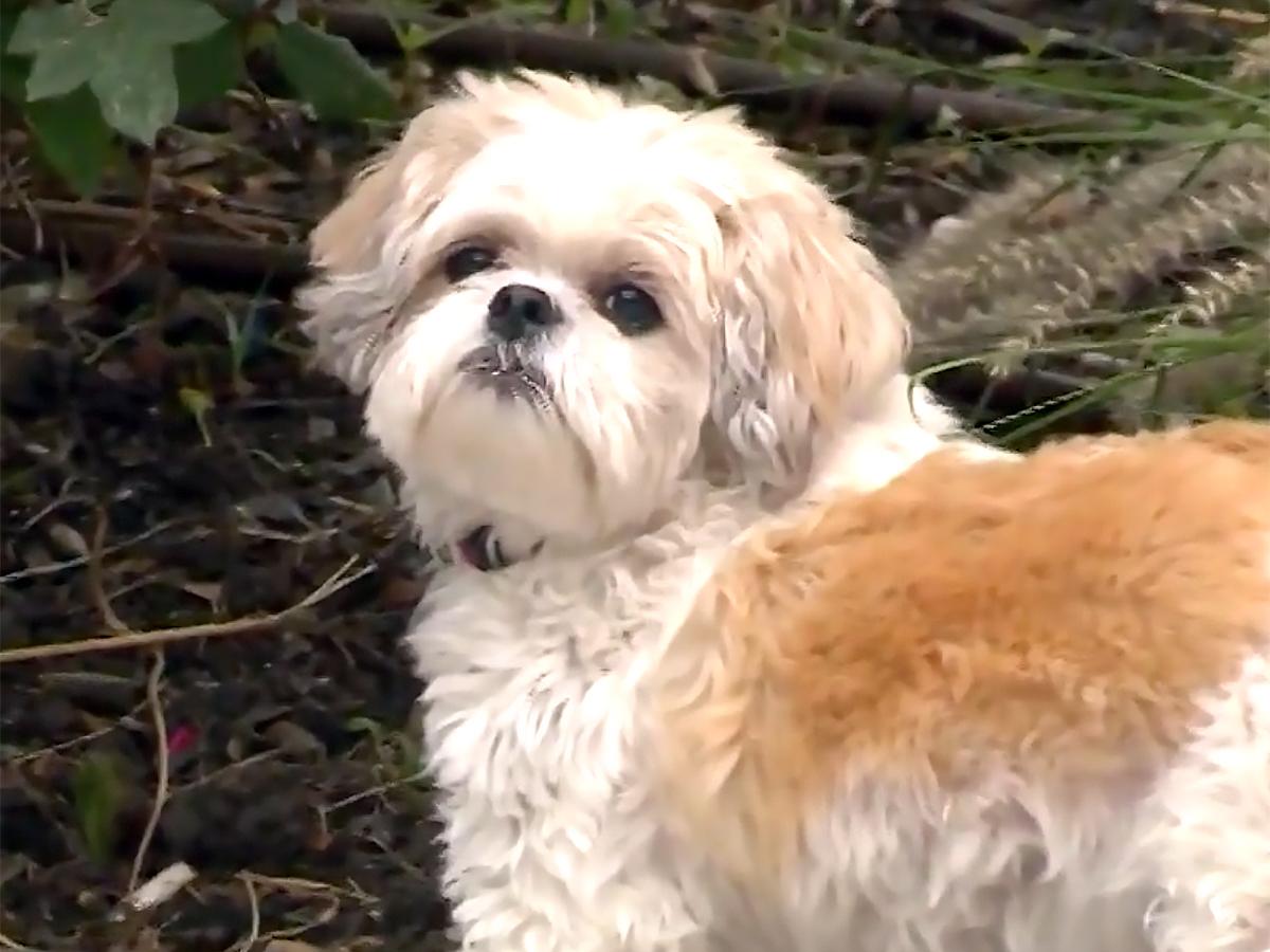 発達障害の子の親たちが始めた犬と人と交流することができる機会 d9-1