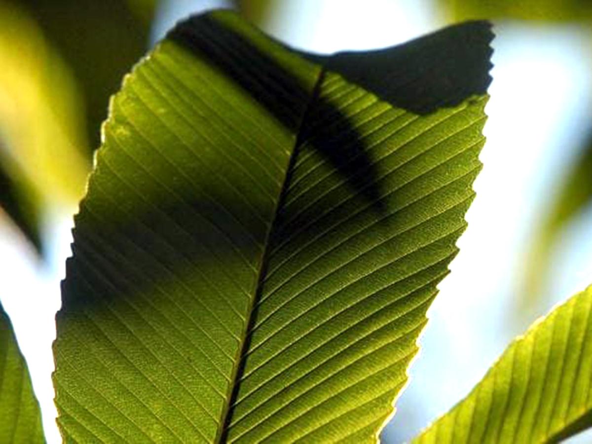 発達障害の子たちにやさしく発達を促してくれる緑があふれる庭 g4