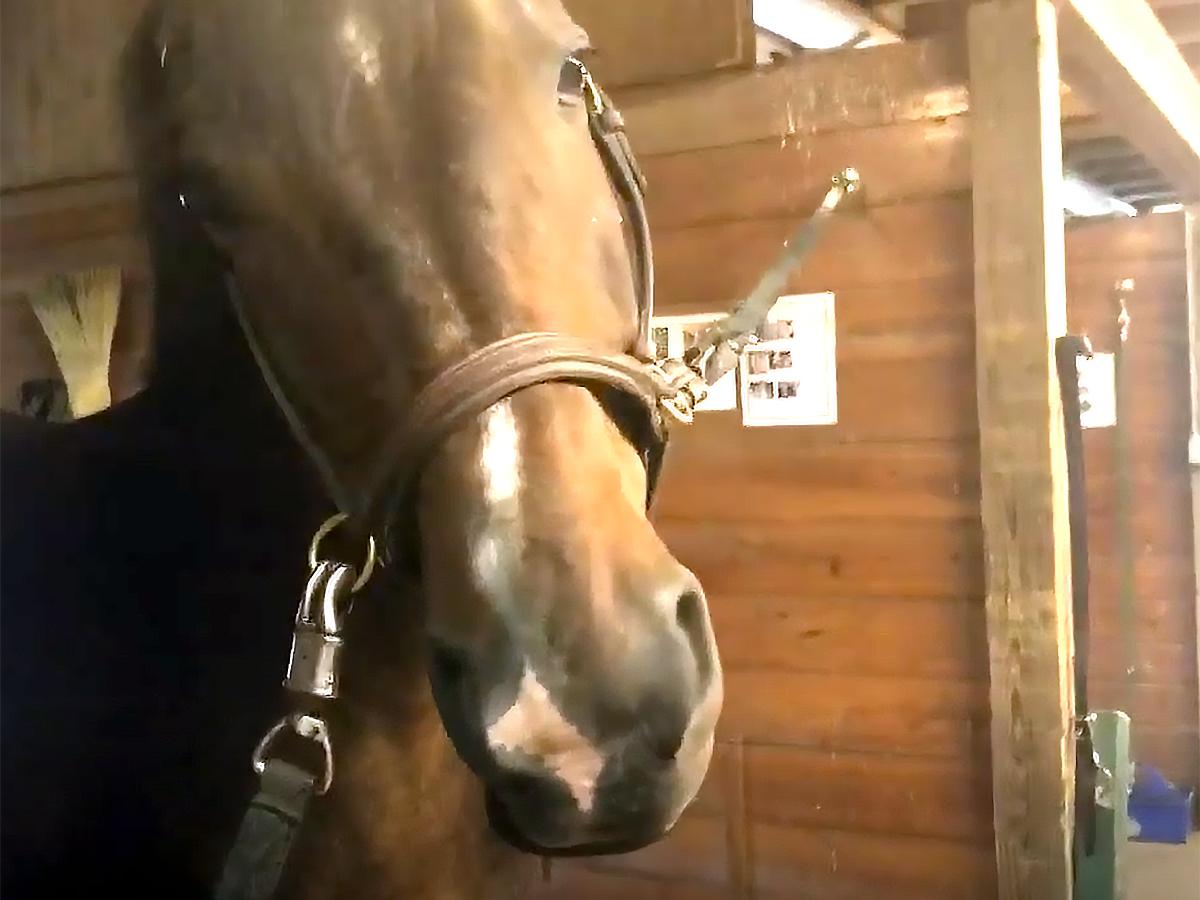発達障害の女性は12年間馬にふれあい培ったことで仕事にも就く u3