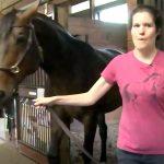 発達障害の女性は12年間馬にふれあい培ったことで仕事にも就く