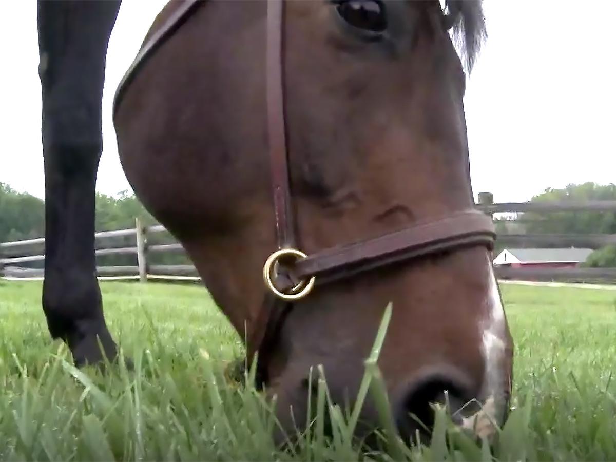 発達障害の女性は12年間馬にふれあい培ったことで仕事にも就く u7