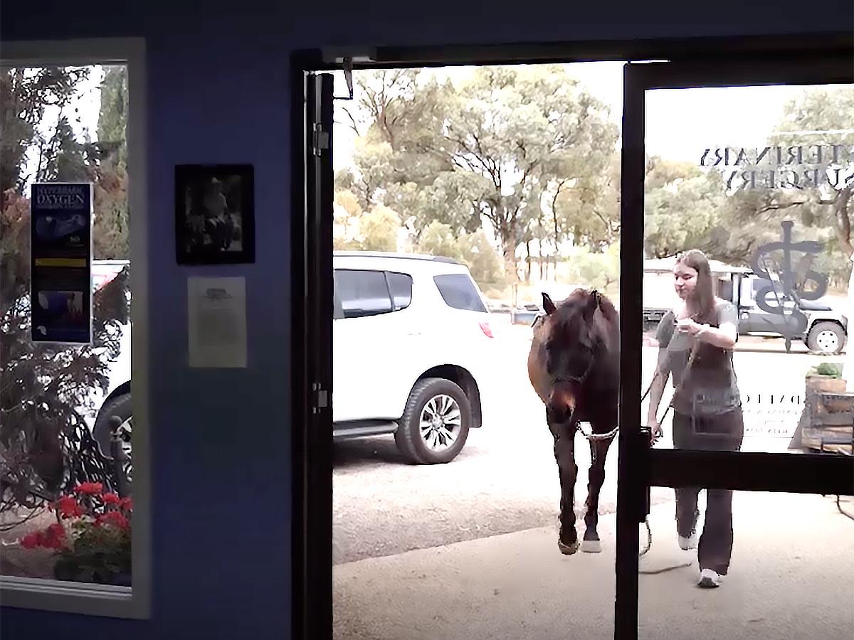 発達障害の娘が馬と過ごすようになってから本当の姿が見えた。 u10-1