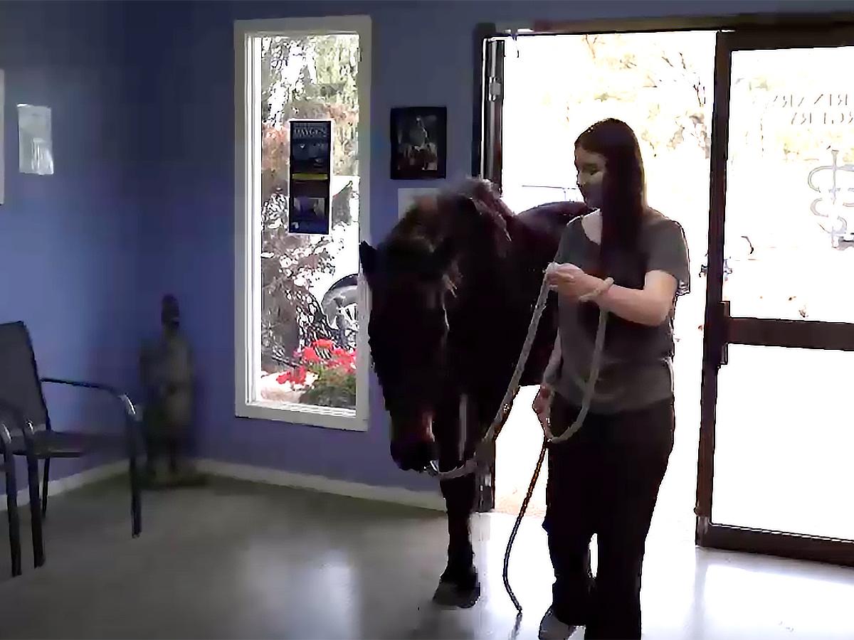 発達障害の娘が馬と過ごすようになってから本当の姿が見えた。 u7-1