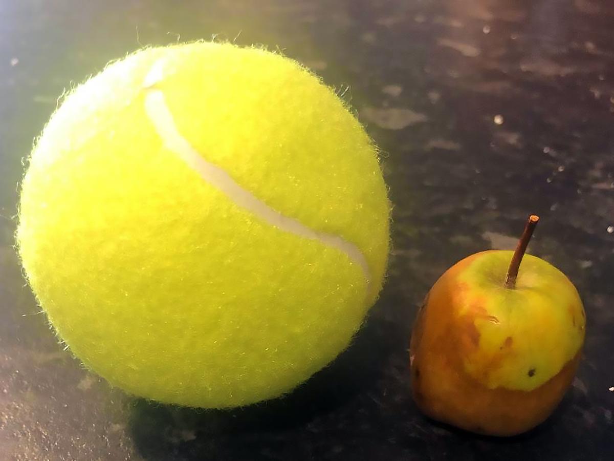 発達障害の子が7年かけて育ててきた、とても大きな小さなりんご r4
