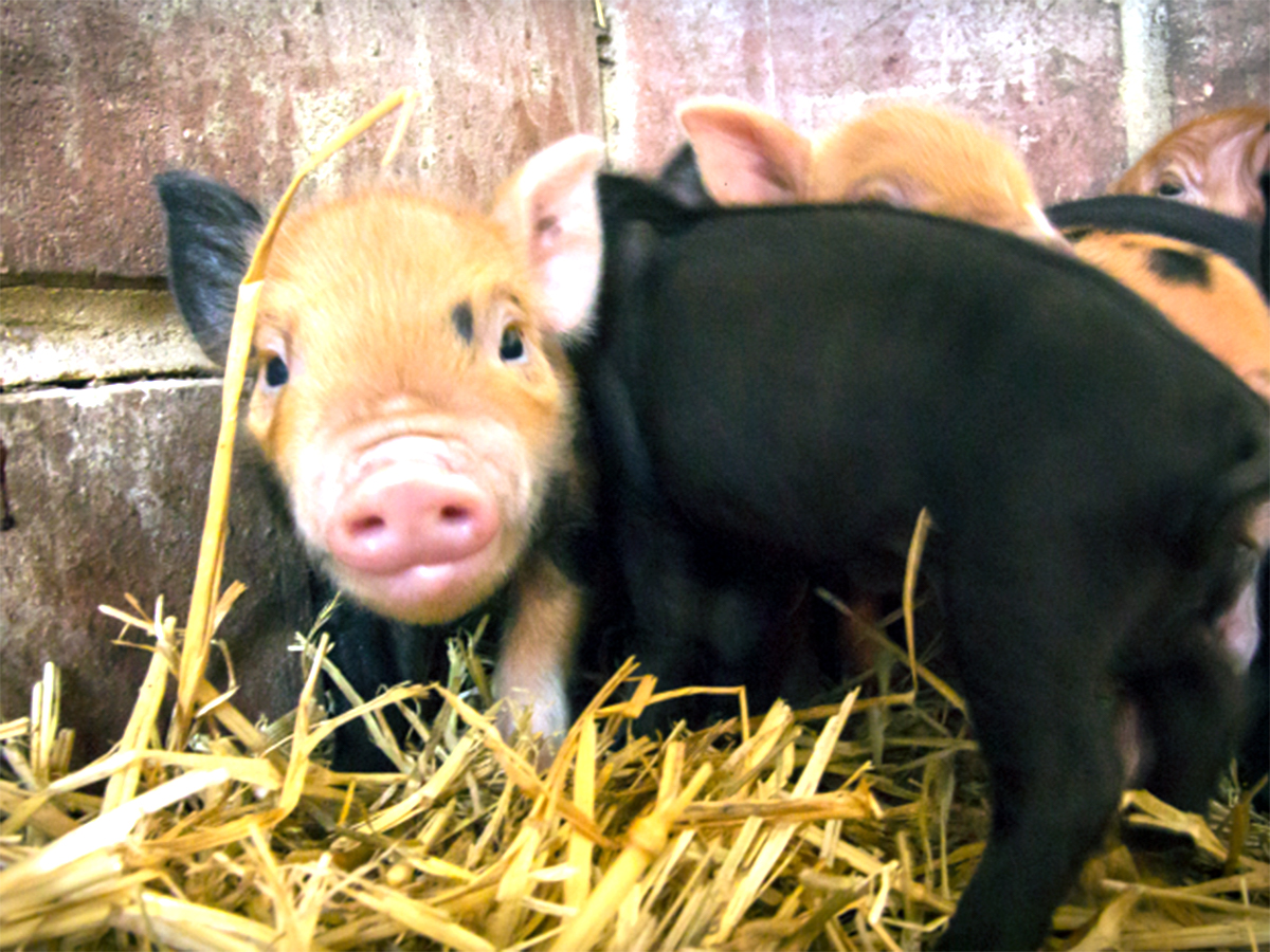 発達障害の子たちが落ち着き自由になれる小さな動物がいる農場 f1-1