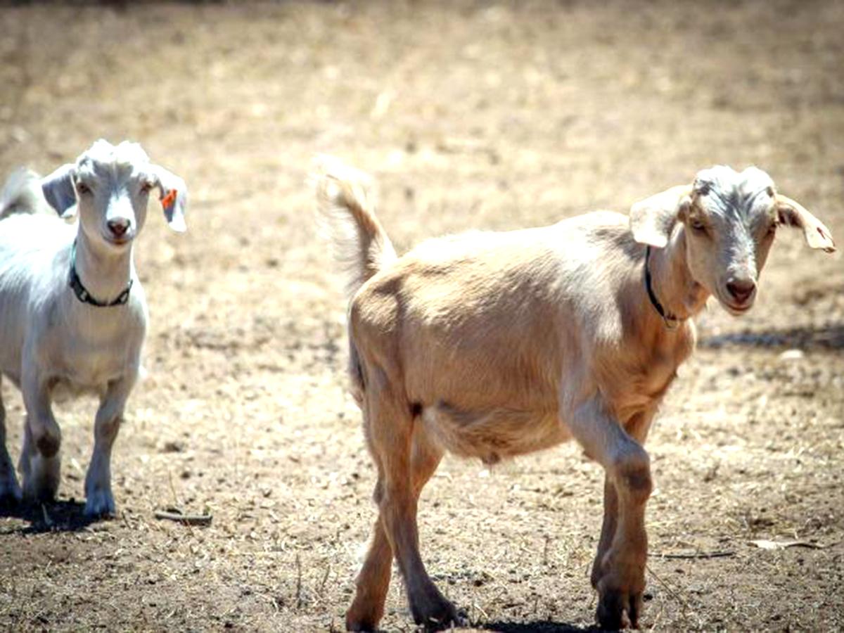 発達障害の子たちが落ち着き自由になれる小さな動物がいる農場 f2-1
