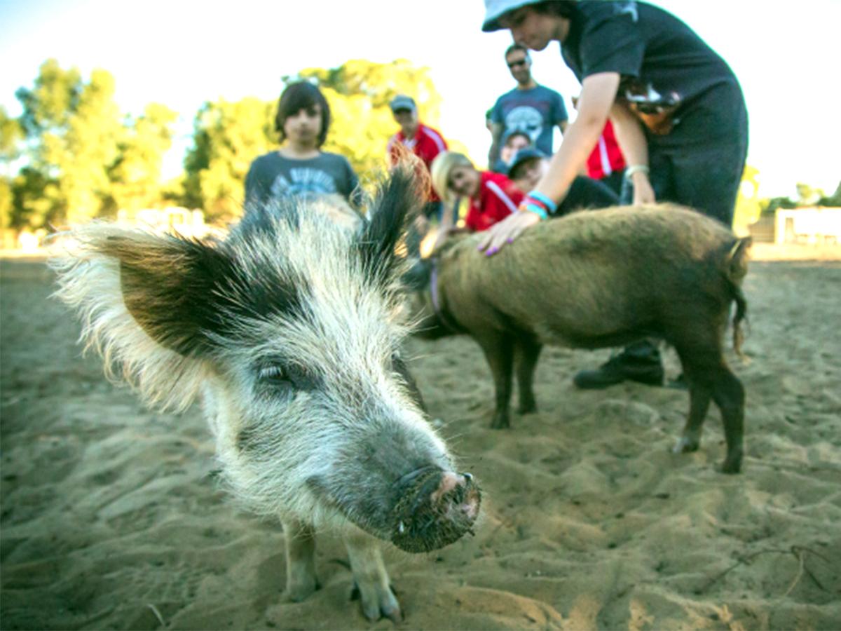 発達障害の子たちが落ち着き自由になれる小さな動物がいる農場