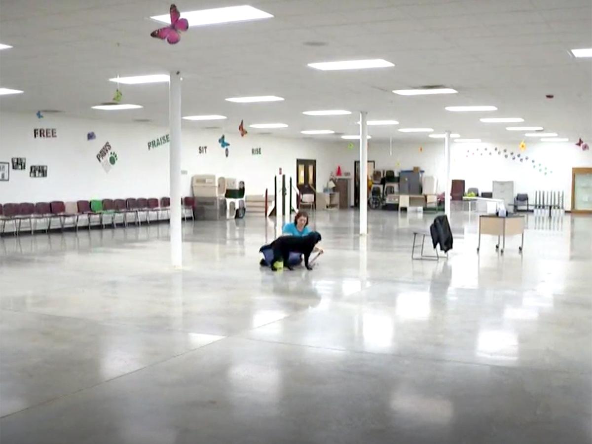 発達障害の自閉症の子どものために特別に訓練をされた介助犬 d2-1