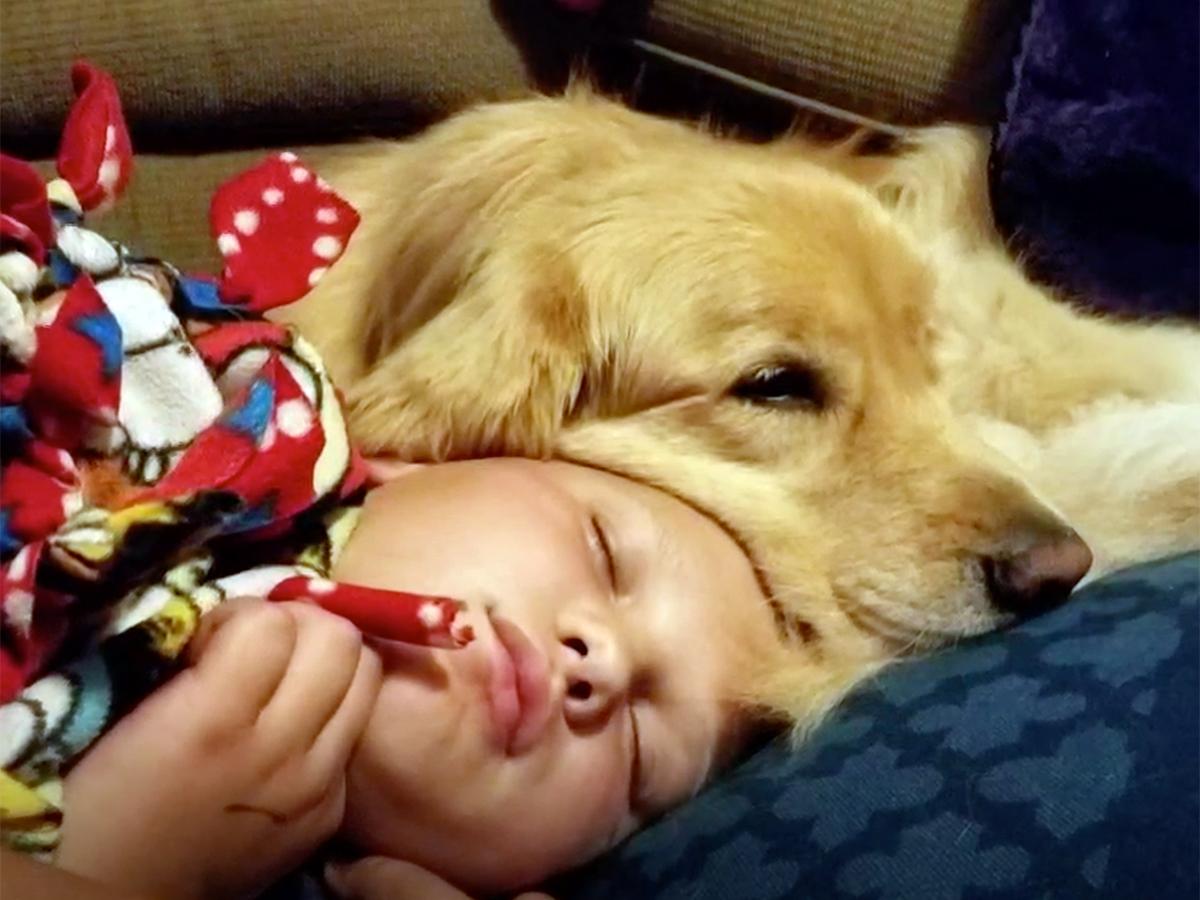 発達障害の自閉症の子どものために特別に訓練をされた介助犬 d8