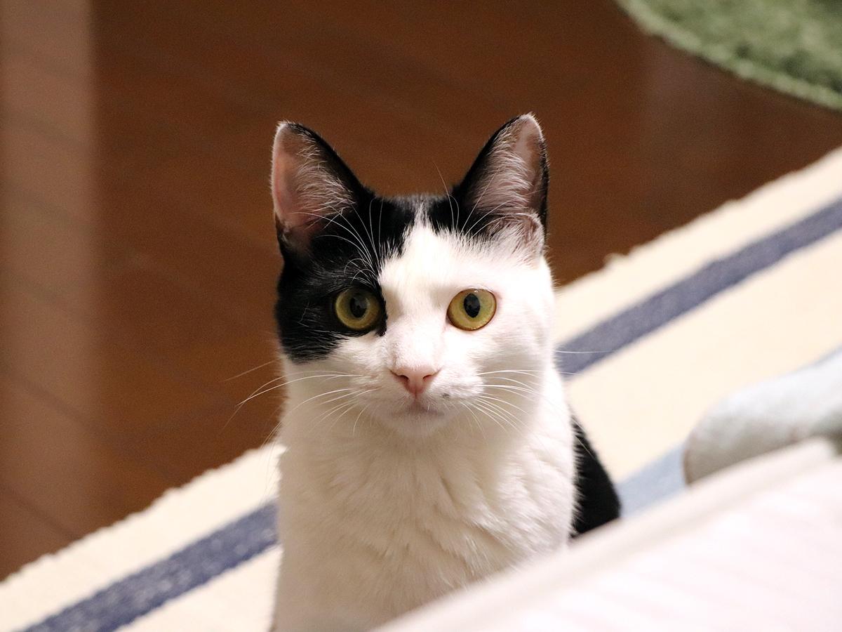 猫は仲間になり発達障害の子の社会的スキルの向上を助けてくれる c1