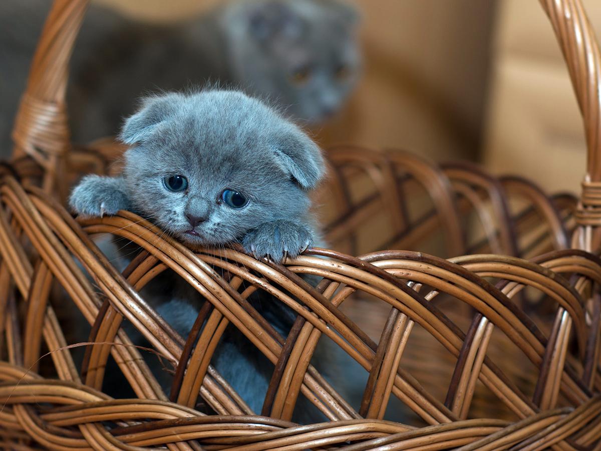 猫は仲間になり発達障害の子の社会的スキルの向上を助けてくれる c4