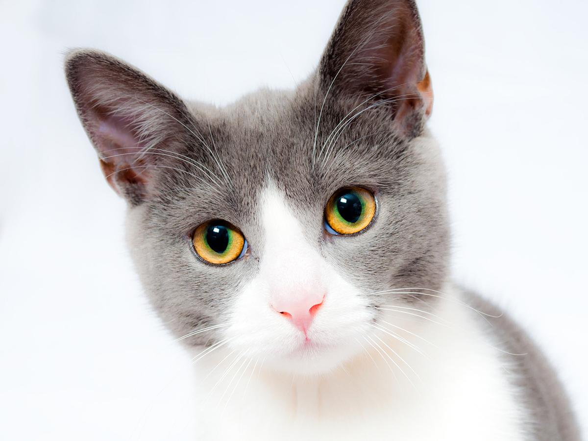 猫は仲間になり発達障害の子の社会的スキルの向上を助けてくれる